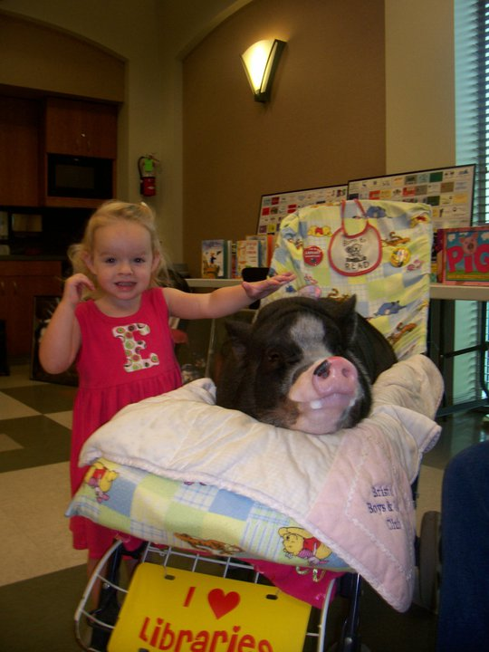 Daisy the Library Pig visits local libraries in the summer!