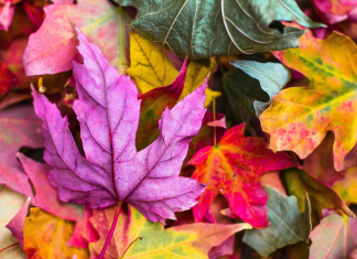 Fall events in Baton Rouge